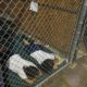 Two female detainees sleep in a holding cell,