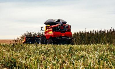 Photo of a combine harvesting hemp in a field