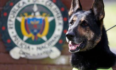 Photo of Colombian drug dog, Sombra