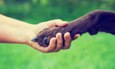 Photo of human hand touching a dog's paw