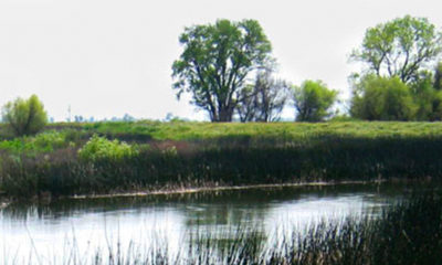 Photo of a Fresno Irrigation District canal