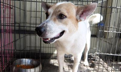 Photo of cute mixed breed dog at animal shelter