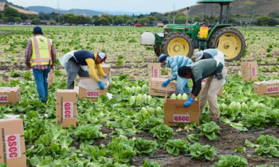 Photo of farmworkers in Salinas, CA