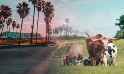Photo illustration of California and Texas scenes