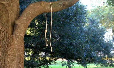 Photo of noose hanging from a tree