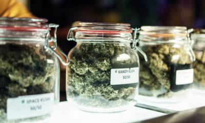 marijuana buds displayed in glass jars