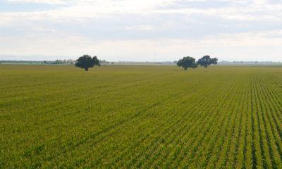 Photo of San Joaquin Valley row crops