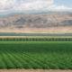 photo of westlands water district crops