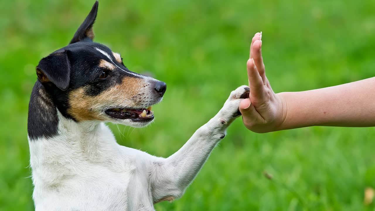 Photo of dog giving trainer a high five