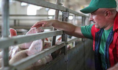 Photo of a pig farmer