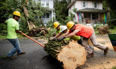 Photo of workers removing a tree