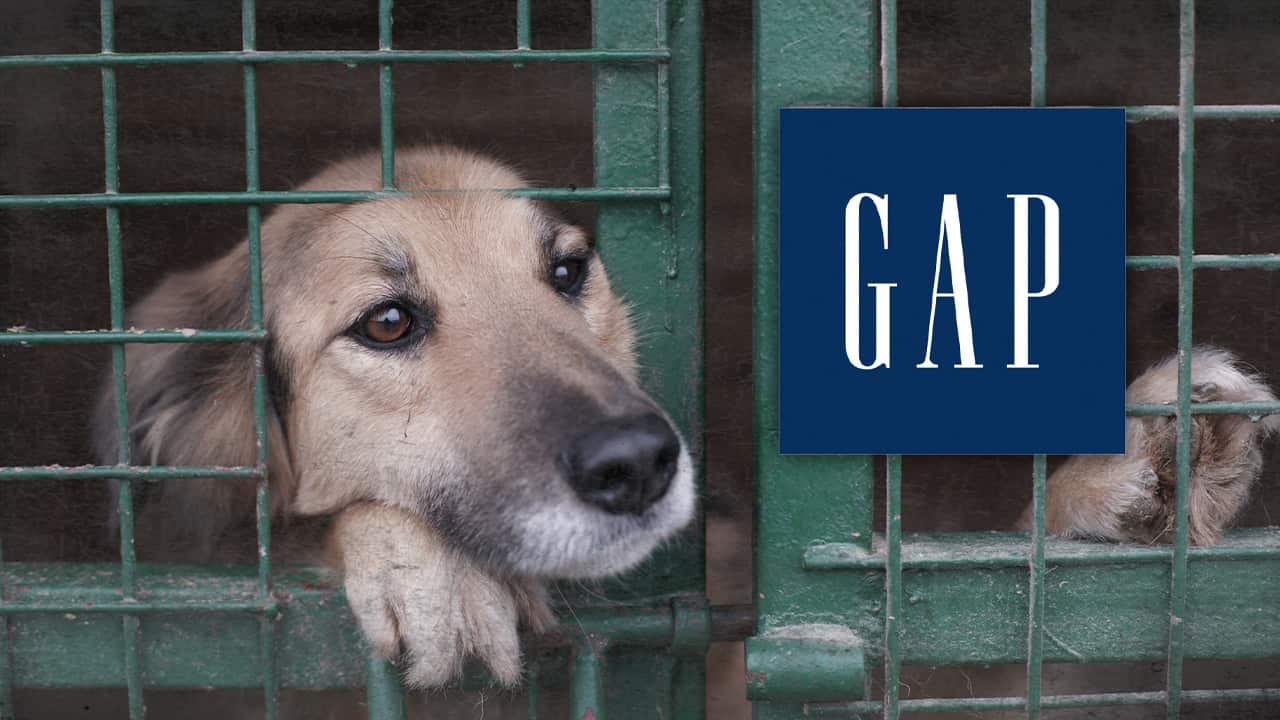 The Gap logo incorporated into a picture of a dog in a cage