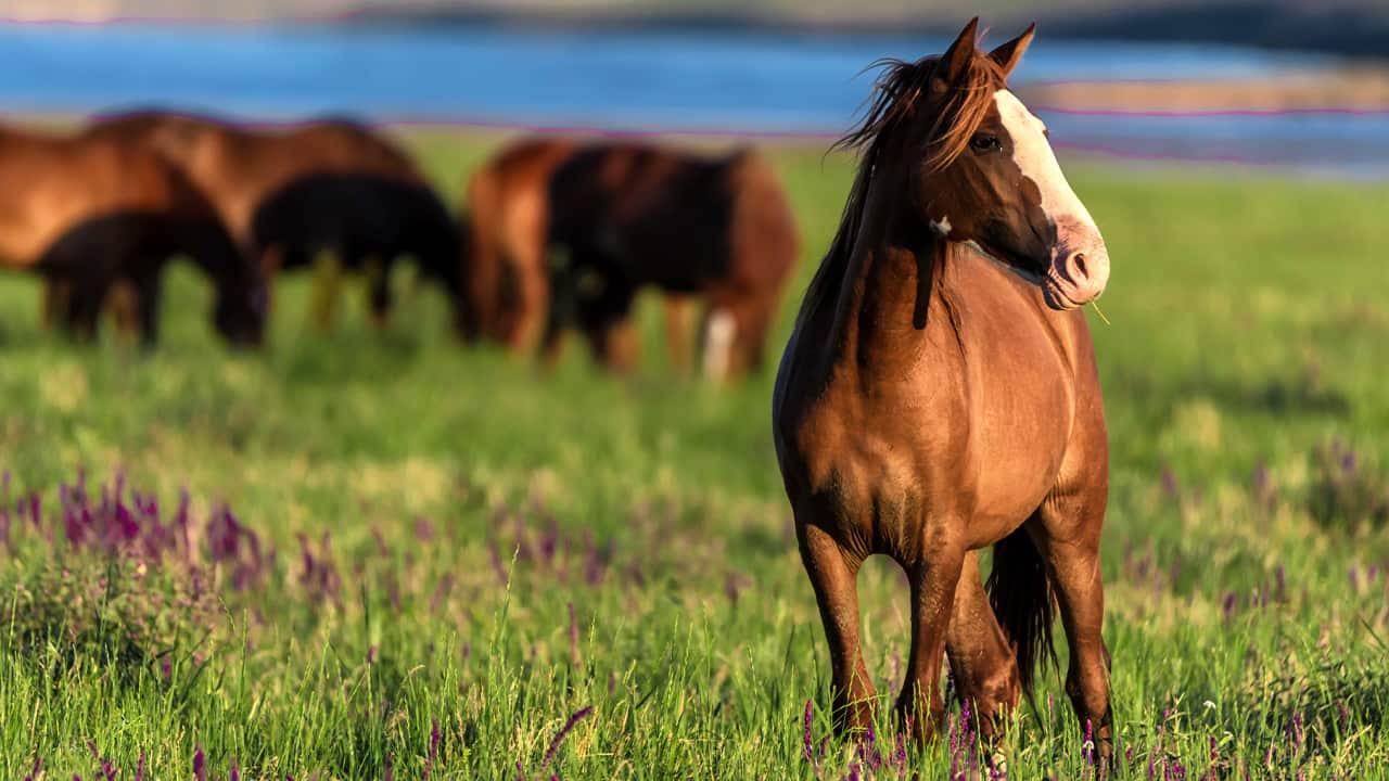 Photo of wild horses