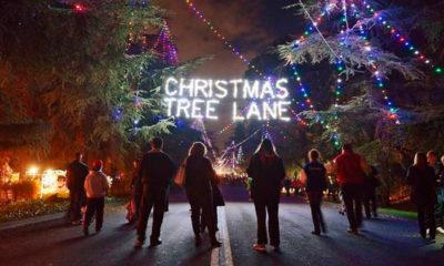 "A photo of pedestrians enjoying ""walk night"" on Christmas Tree Lane"