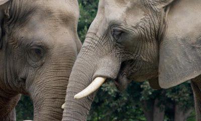 Photo of Tembo and Hero the elephants