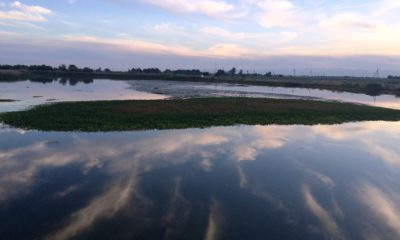 Photo of Mendota Pool, which holds 3,000 acre-feet of water in western Fresno County