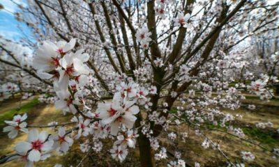 Photo of blossom trees