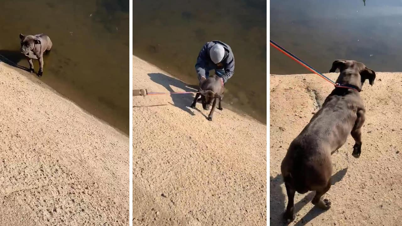 Photo of a dog being rescued from a canal in Fresno