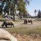 Photo of rhinos at the Fresno Chaffee Zoo