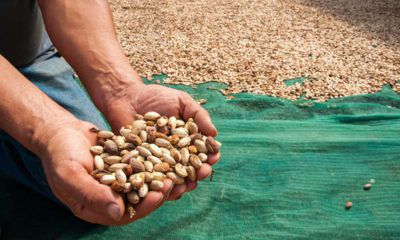 Photo of a man holding pistachios